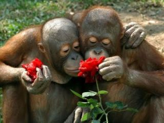 origin if valentines day