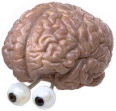 Brain eyes