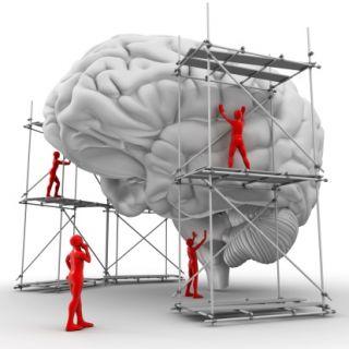 neuroscience of branding