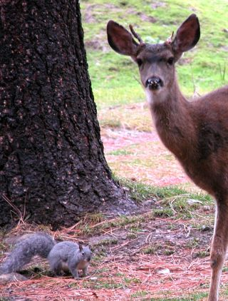 Buck and squirrel