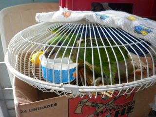 Parrot in small cage