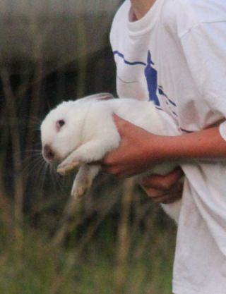 Terrified rabbit.