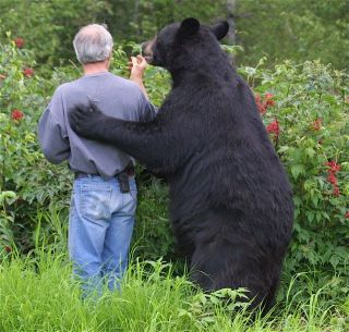 Bear and man together