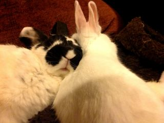 Two rabbits sleeping.