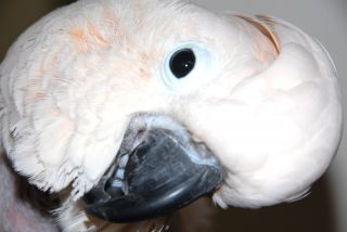Cockatoo photo