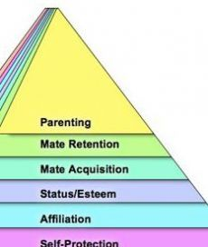 The Renovated Hierarchy