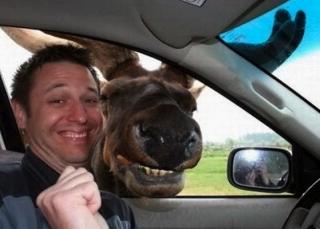 Moose Smiling Selfie