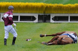 Horse Racing: Cruelties We Condone and Cruelties We Condemn