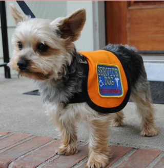 Service Animal Scams A Growing Problem Psychology Today