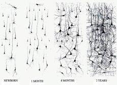 Nature VERSUS Nurture (Part 2): Building Brains