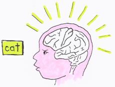 Baby Brain Illustration