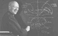 Wilder Penfield drawing brain