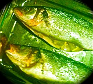 fukushima radiation fish irradiated food
