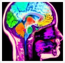 Dopamine centers of the brain - neuroscience