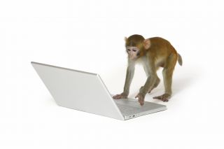 monkey typing on a laptop
