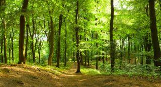 Green-time & ADHD