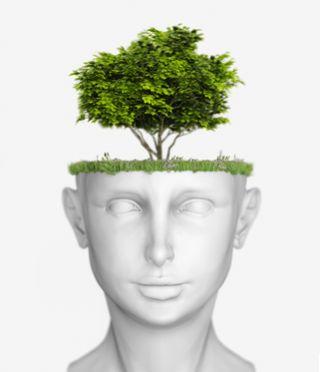 Natural brain health