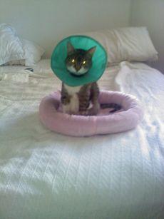 homer, homer blind cat, gwen cooper, scarlett cooper