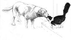 Cat rubbing dog