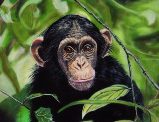 Chimpanzee's Emotions Similar to Ours