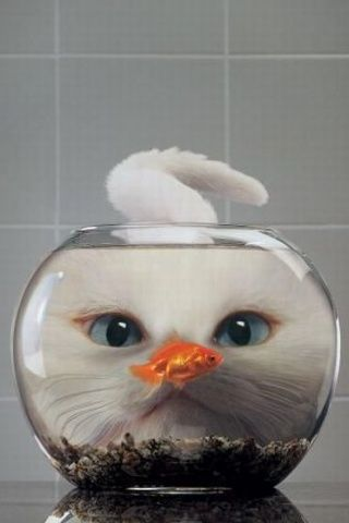Cat and fish in a fish bowl