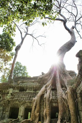 Tree rootss on ancient temple