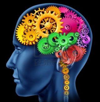Sexuality studies brain developments
