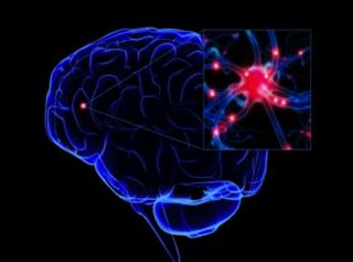 """Do """"Mirror Neurons"""" Help Create Social Understanding? - 144779 146550"""