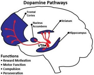 The neuroscience of pleasure and addiction psychology today source ccuart Image collections