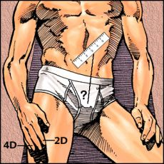 illustration showing the index and ring fingers, with a ruler over a male crotch