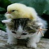 Kittten