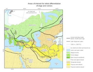 Areas of interest in the Middle East, Europe, and Siberia for dogs.