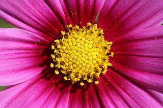 http://www.flickr.com/photos/pinksherbet/2898759838/ Photopin Cc