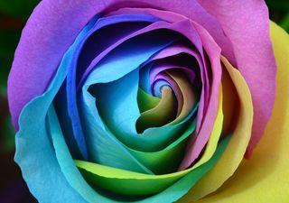 Photo by Laura Ockel. Copyright free. Unsplash.com