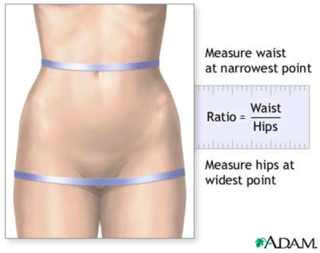 e4c86950fb8ae The Relationship Between Waist-Hip Ratio and Fertility