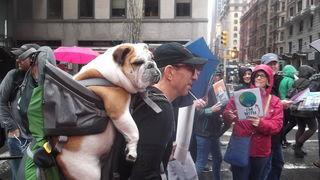 Gender Gap in Carrying of Bulldogs in Backpacks