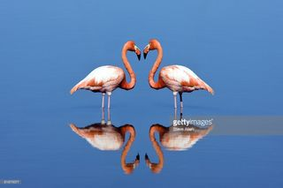 Synchronicities: Hello, You're On the Right Path!  Flamingos-picture-id81870077
