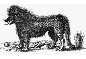 Beast of Gévaudan/Public Domain