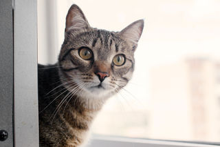 Do You Know Your Cat's Personality? | Psychology Today