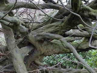 Entangled and Twisted Tree Branches. PublicDomanPictures.