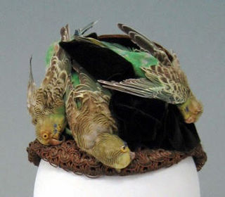 Budgerigar Hat; Courtesy Tessa Boase