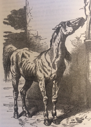 The old horse's appeal (Harrison Weir, 1871); Courtesy of Keri Cronin