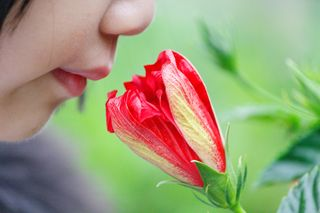 """Smell"" by Dennis Wong/ Flickr (CC BY 2.0)"