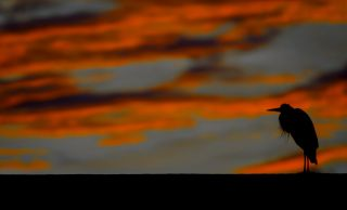 Lone Bird at Sunset Dale Jarvis AreaOne Art and Design, Fayetteville NC