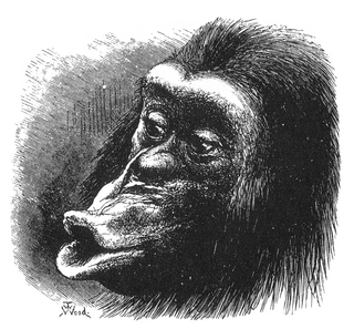 Figure 18 from Charles Darwin's The Expression of the Emotions in Man and Animals/Mr. T. W. Wood/Wikimedia Commons