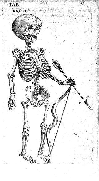 """Foetal skeleton with bow and arrow, 17th century"" / CC"