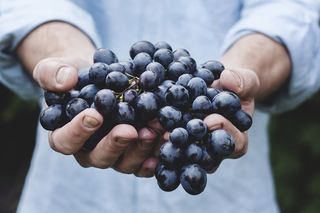 organic purple grapes