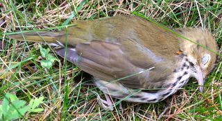 Watching A Bird Die | Psychology Today