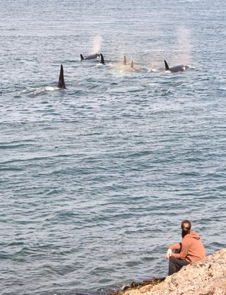 Rachel Clark with orca whales. Photo by Avery Caudill, used with permission