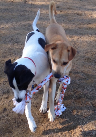 Molly and Charlotta playing tug-of-war